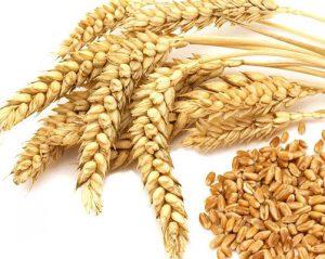 راهکاری هوشمندانه از دانه به آرد گندم
