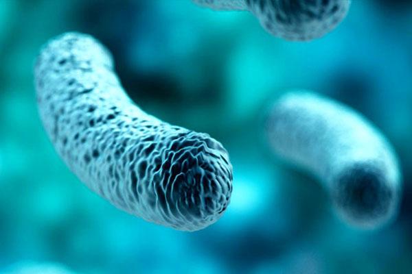 باکتری پروبیوتیک