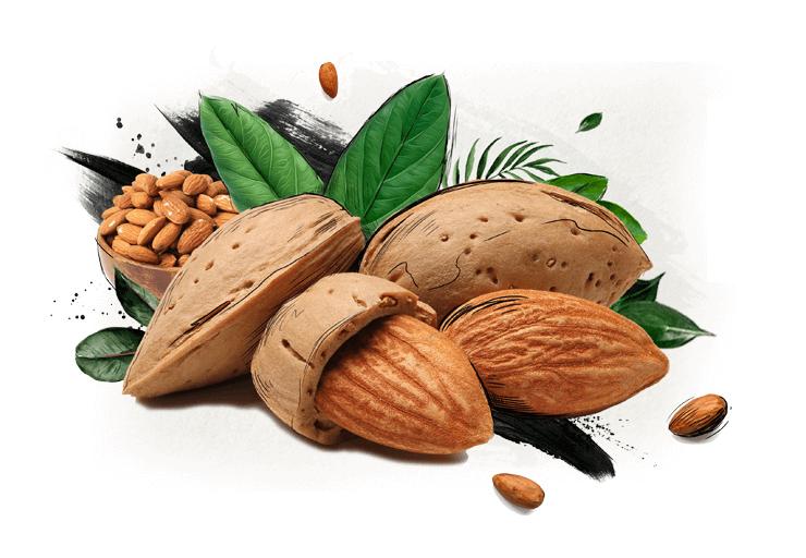 بادام در گز شیرین 28% مغز بادام آردی